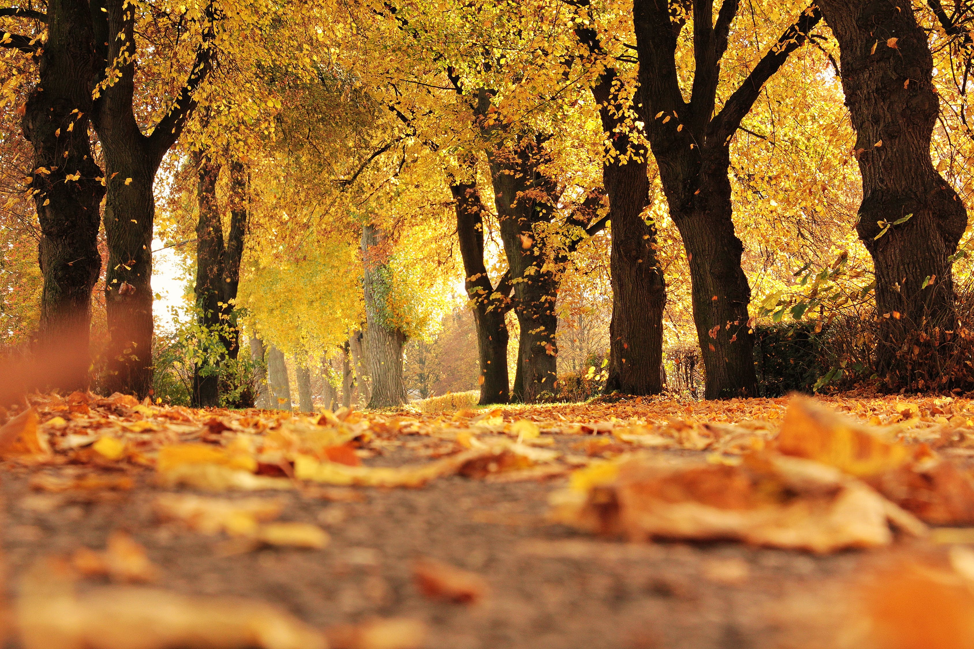 Fall in Riverdale